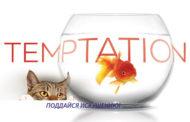 «Берег» протестировал новый картон Temptation